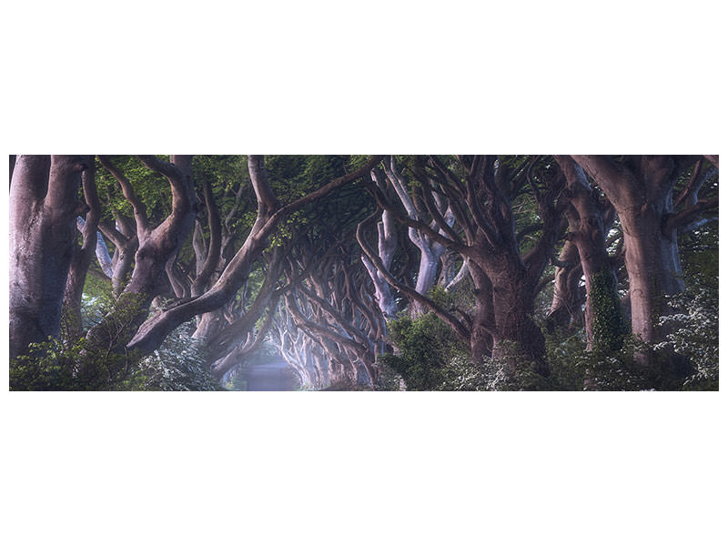 Tableau sur Toile Panoramique The Dark Hedges