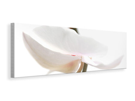 Panoramic Canvas Print XXL Orchid Flower