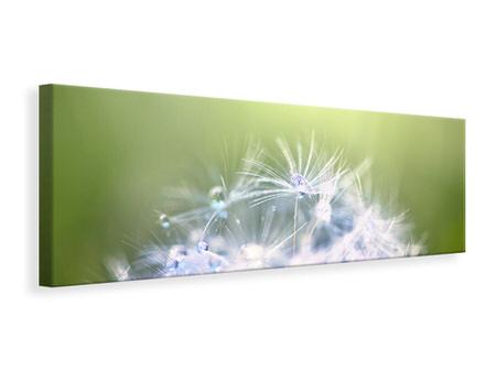 Panoramic Canvas Print Dandelion XL In Morning Dew