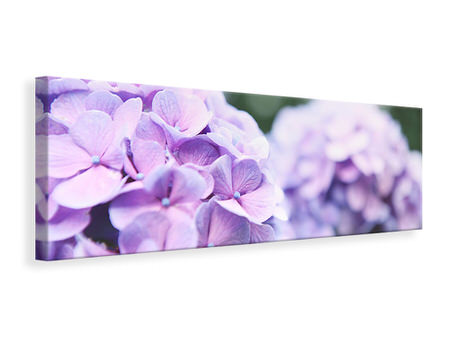 Panoramic Canvas Print Hydrangeas