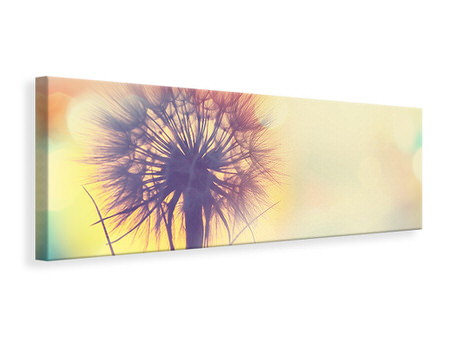 Panoramic Canvas Print The Dandelion In The Light