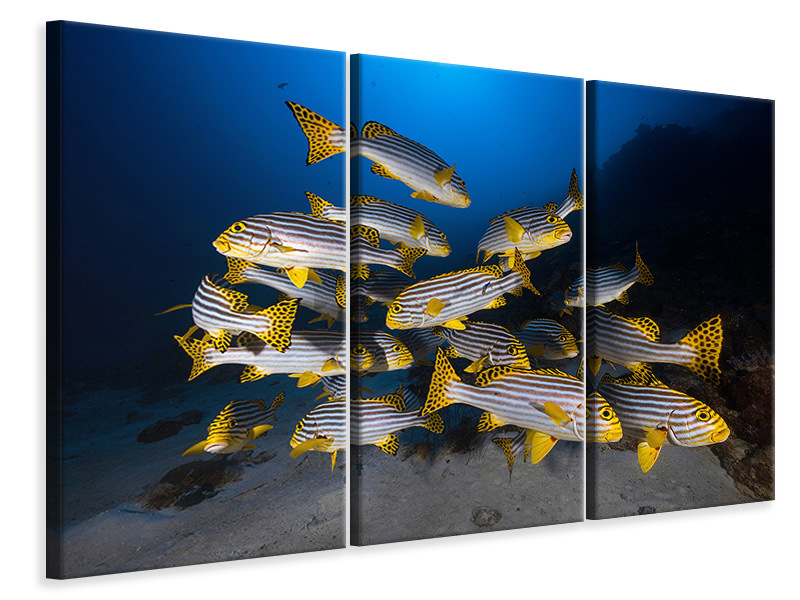 Tableau sur Toile en 3 parties Underwater Photography-Indian Ocean Sweetlips