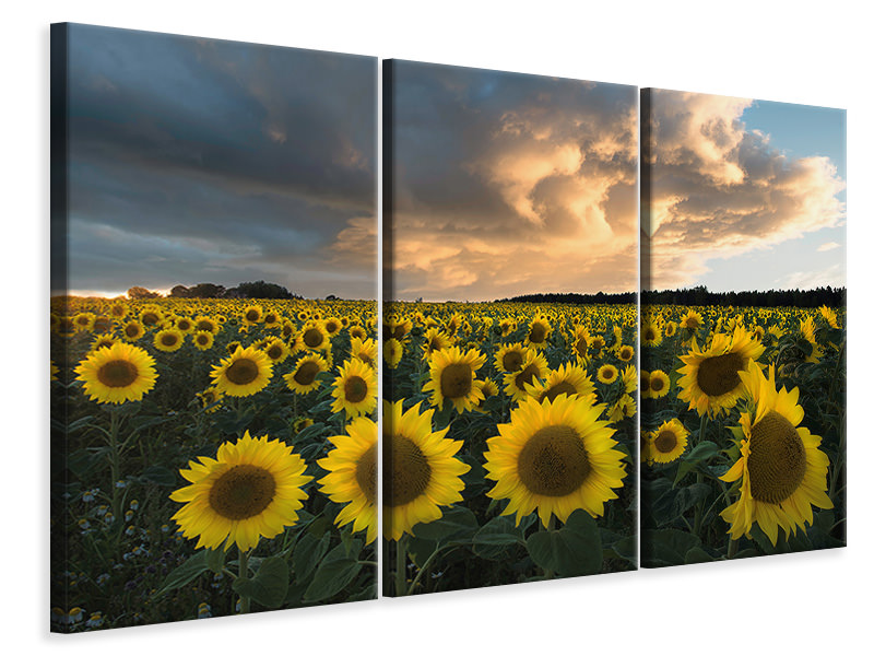 Stampa su tela 3 pezzi Sunflowers In Sweden