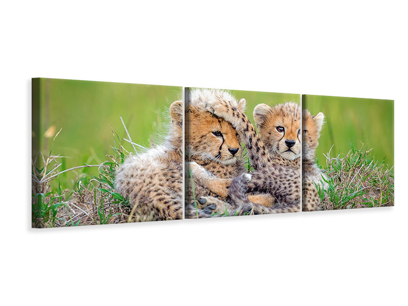 Panoramic 3 Piece Canvas Print Promising