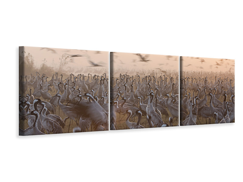 Panoramic 3 Piece Canvas Print The Mass