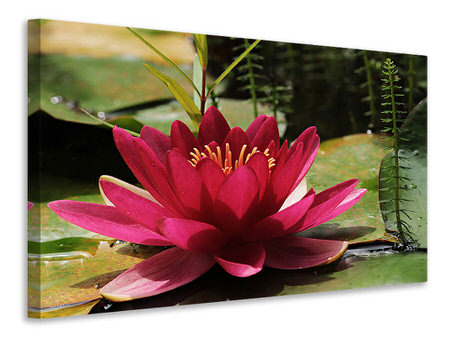 Canvas print Water lily in red