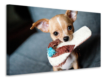 Canvas print Obedient chihuahua