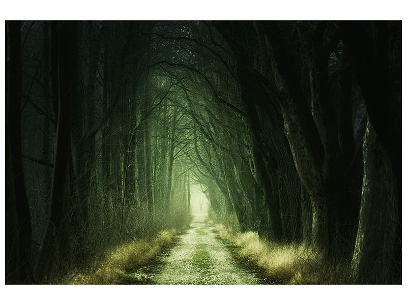 Canvas print Mysterious forest 2