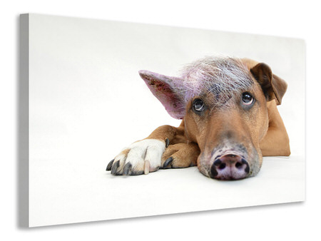 Canvas print The funny pig dog