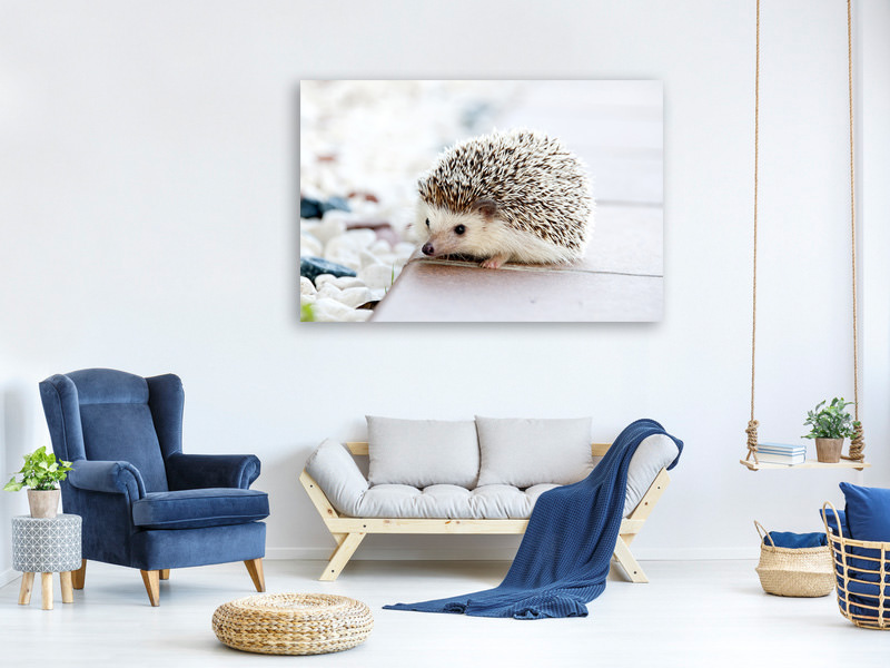 Canvas print The hedgehog baby