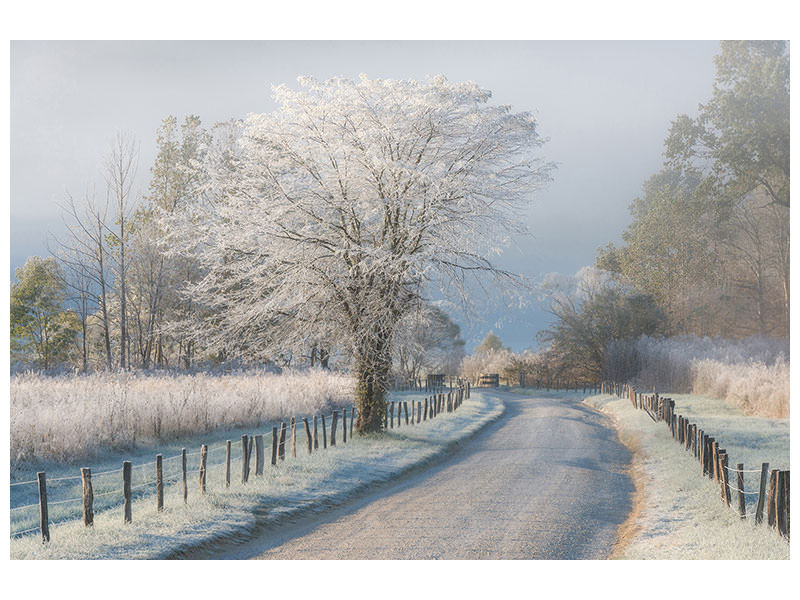 Canvas print A Frosty Morning