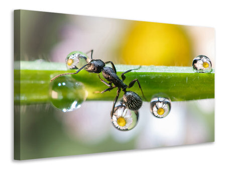 Stampa su tela The Ant Between The Drops