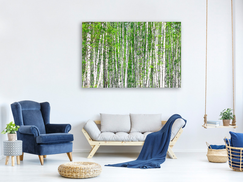 Canvas print The Birch Forest