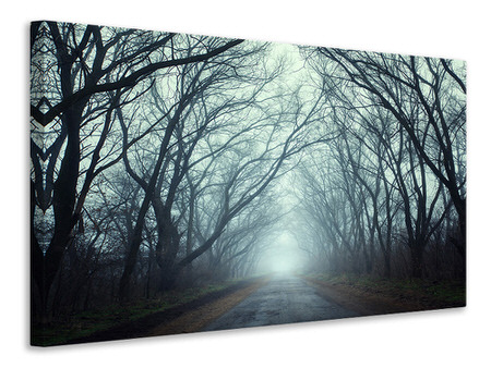 Canvas print Cloud Forest