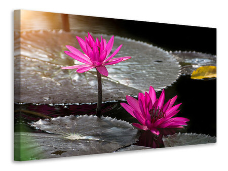 Canvas print Water Lily In The Morning Dew
